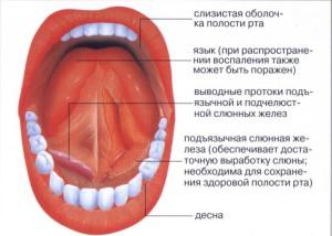 protoki-v-gorle-pervaya-analniy-seks